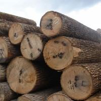 家具制作用优质木材